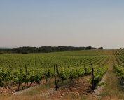 Château Camplazens - vignoble la Clape